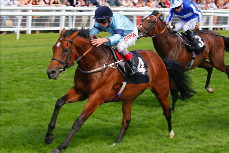 Unbeaten 2yo Thunderous wins Listed Denford Stakes at Newbury