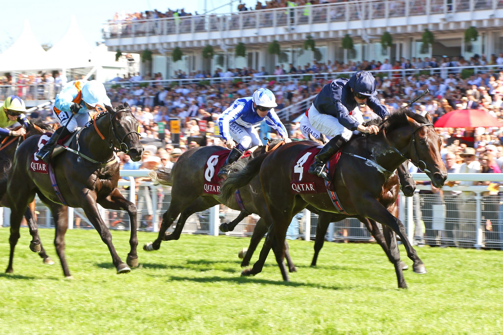 NEW STALLION BY NO NAY NEVER JOINS THE ROSTER AT HIGHCLERE STUD